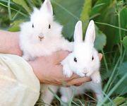 кролики,  кролиководство